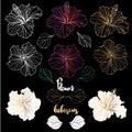 Vector elegant decorative hibiscus flowers, design elements Royalty Free Stock Photo