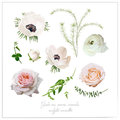 Vector elements flower collection of Pink white garden rose and