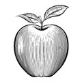 Vector engraving apple Royalty Free Stock Photo