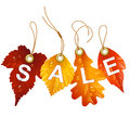 Vector fall leaf isolated on white background autumnal discount Royalty Free Stock Images