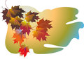 Vector fall leaves Stock Images