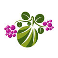 Vector flat green leaf with tendrils and purple seeds. Herbal an