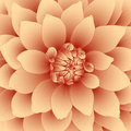 Vector floral background of orange dahlia flower Royalty Free Stock Image