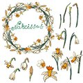 Vector floral frame with daffodils