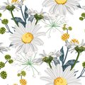 Vector floral seamless pattern with summer herbs, fern and chamomile camomile flowers.