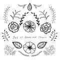 Vector floral set. Graphic collection with leaves and flowers, drawing elements. Royalty Free Stock Photo