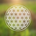 Vector Flower of Life Symbol on a Natural Background Royalty Free Stock Photo