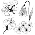 Vector flowers set illustration eps Royalty Free Stock Image