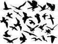 Vektor létání ptactvo