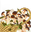 Vector forest mushrooms in basket on white background Royalty Free Stock Photos