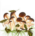 Vector forest mushrooms on a white background Royalty Free Stock Photo
