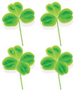 Vector four and three Leaf Clover Royalty Free Stock Photos