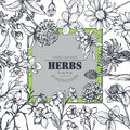 Vector frame with herb and wildflower elements