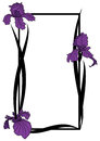 Vector frame with irises