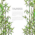 Vector framewith hand drawn bamboo branches on white background and place for your text Royalty Free Stock Photo