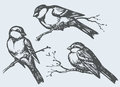 Vector freehand drawing. Tits, sparrows and bullfinches on branc