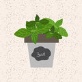 Vector - Fresh basil herb in a flowerpot. Aromatic leaves used t