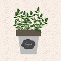 Vector - Fresh thyme herb in a flowerpot. Aromatic leaves