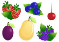 Vector-fruits-on-isolated-background Stock Photo