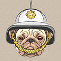 Vector funny cartoon dog pug in the british helmet serious breed Royalty Free Stock Image