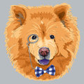 Vector funny cartoon hipster chow chow dog breed in a blue glasses and bow tie Stock Photo