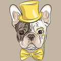 Vector funny cartoon hipster french bulldog dog breed in a gold hat glasses and bow tie Royalty Free Stock Photos