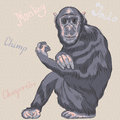 Vector funny cartoon monkey Chimpanzee Royalty Free Stock Images
