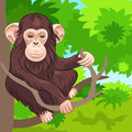 Vector Funny monkey chimp in the jungle Royalty Free Stock Images