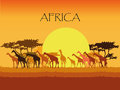 Vector giraffes silhouettes in Savannah