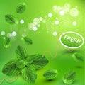 Vektor zelený čerstvý mäta listy