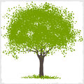 Vector green blot tree Royalty Free Stock Photos
