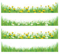 Vector green grass with chamomiles and dandelions background is my creative handdrawing you can use it for spring summer easter Stock Images