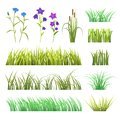 Vector green grass herb and flowers nature isolated on white background design template grassy elements illustration