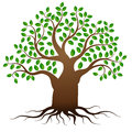 Vector green tree with roots