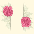 Vector greeting card with peonies illustration for Stock Image
