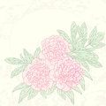 Vector greeting card with peonies illustration for Stock Photography