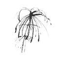 Vector hand drawing plant equisetum on a white background Stock Photography