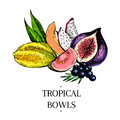 Vector hand drawn exotic fruits. Engraved smoothie bowl ingredients. colored icons. Tropical sweet food. Carambola