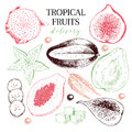 Vector hand drawn exotic fruits. Engraved smoothie bowl ingredients. Tropical sweet food delivery. Pitaya, carambola
