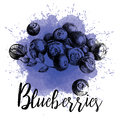 Vector hand drawn illustration blueberries