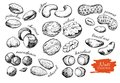 Vector hand drawn nuts set engraved collection Royalty Free Stock Photos