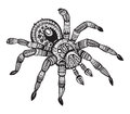 Vector hand drawn ornate spider in zentangle style. Royalty Free Stock Photo
