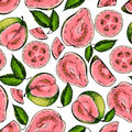 Vector hand drawn seamless pattern of isolated guava. Engraved colored art. Delicicous tropical vegetarian objects.