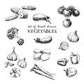 Vector hand drawn sketch vegetable set. Eco foods