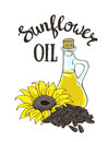 Vector hand drawn yellow sunflower, sunflower seeds and glass jug with oil. Royalty Free Stock Photo