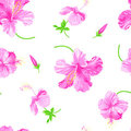 Vector hibiscus on white background Stock Photo