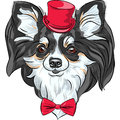 Vector hipster dog chihuahua breed smiling color sketch of the cute in the red hat with bow tie Stock Images