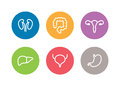 Vector human internal organs icons. Liver, kidneys, uterus, bladder, stomach and colon