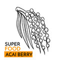 Vector icon superfood acai berry