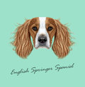 Vector illustrated Portrait of English Springer Spaniel dog Royalty Free Stock Photo
